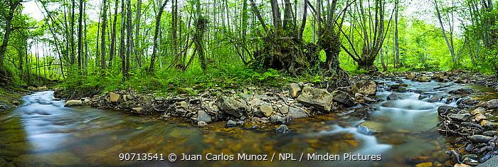 Bayas river flowing through woodland, Gorbeia Natural Park, Alava, Spain, May 2015.