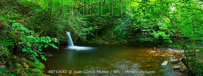 View of a river flowing through woodland, Valles Pasiegos, Cantabria, Spain, May 2015.