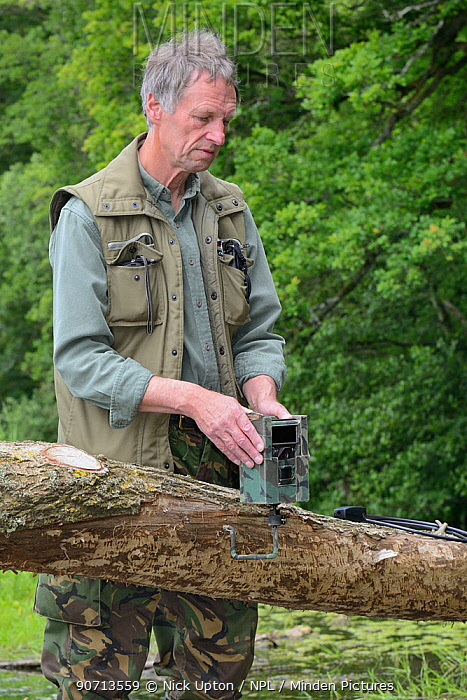 Tom Buckley setting up an infra red trailcam on a Willow tree (Salix sp.) felled by Eurasian beavers (Castor fiber) on the banks of the River Otter, Devon, England, UK, May. Model released.