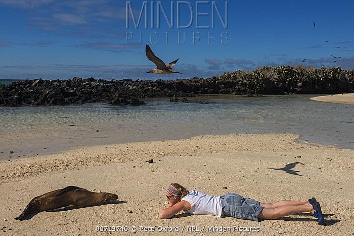 Tourist watching Galapagos sealion (Zalophus wollebaeki) Galapagos. Endemic.