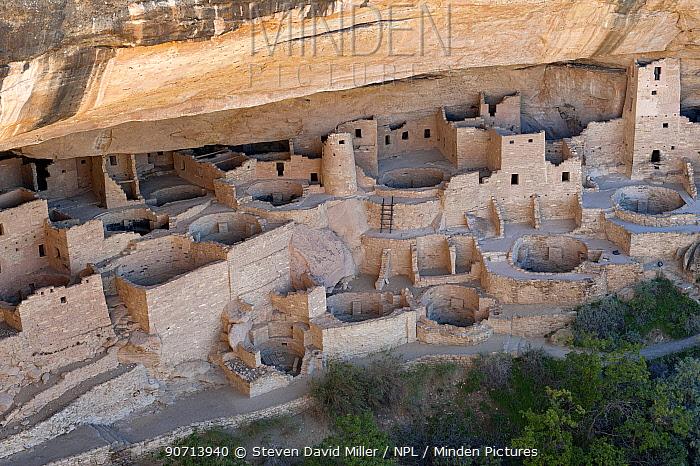 Cliffs Palace, a village built against the soft sandstone rock face by ancestral Pueblo Indians between 1190 and 126 , Mesa Verde National Park, Colorado USA