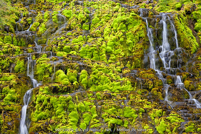 Waterfall surrounded by moss, Iceland. May 2007.
