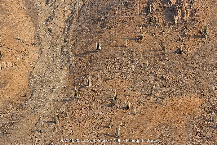 High angle view of the  Nasca desert with cacti, Paracas National Reserve, Peru, November 2006.