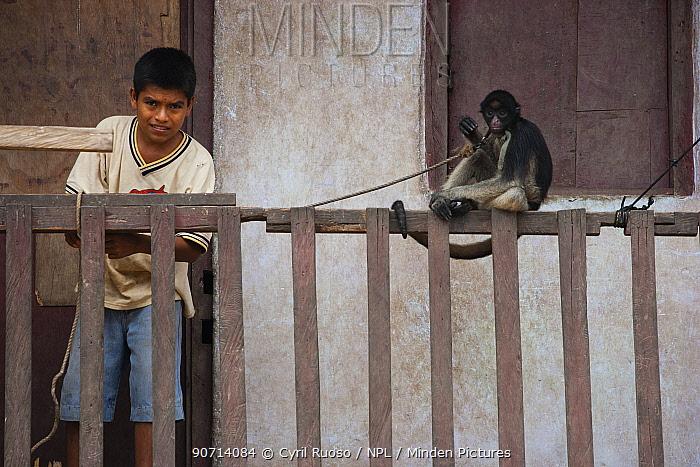 Boy tying up pet Tufted capuchin (Sapajus apella) on to fence, Urymaguas, Amazon, Peru, November 2006.