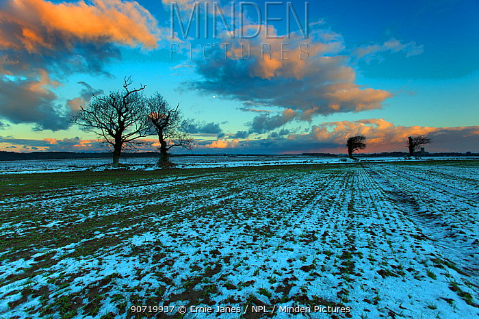 Arable fields in snow, near Southrepps village, North Norfolk, January