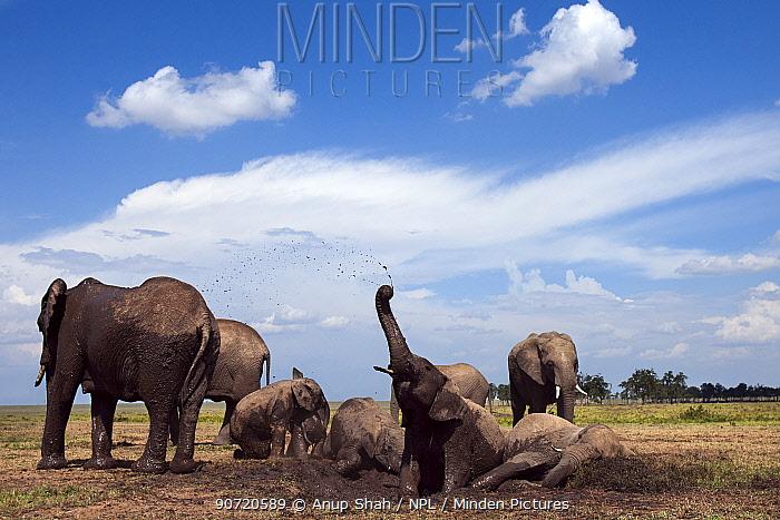 African elephants (Loxodonta africana) wallowing in a waterhole. Masai Mara National Reserve, Kenya. Taken with remote wide angle camera.