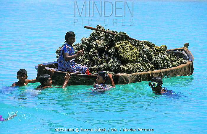 Children are playing near a boat full of dead pieces of coral, harvested for construction. Noonu Atoll, Maldives, Indian Ocean.