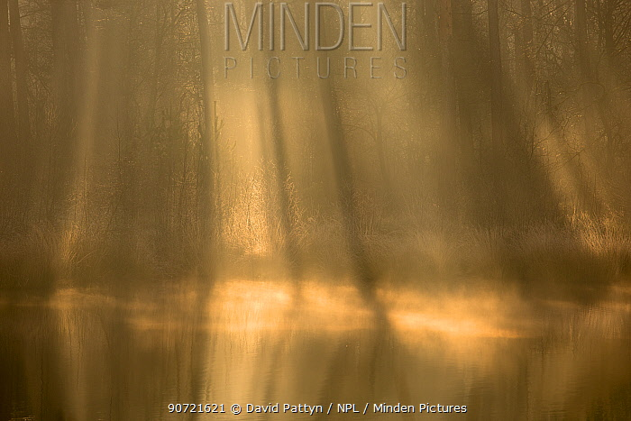 Rays of light in a fen on a misty morning, Oisterwijkse Bossen en Vennen reserve, Oisterwijk, The Netherlands, January