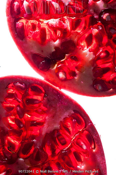 Pomegranate (Punica granatum) cross section, backlit.