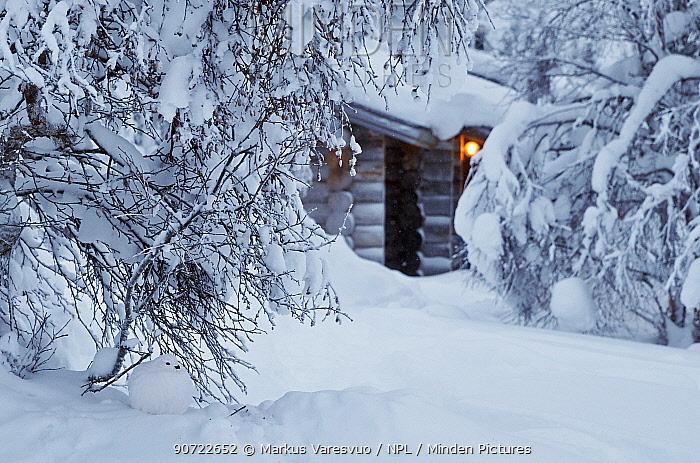 Willow grouse (Lagopus lagopus), Kiilopaa, Inari, Finland, January.