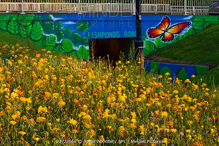 Mixture of flowers, including Marigolds (Calendula officinalis) sown to attract wild bee species grown on roundabout / underpass of Motorway, M32, in inner city Bristol, Avon, UK, September.