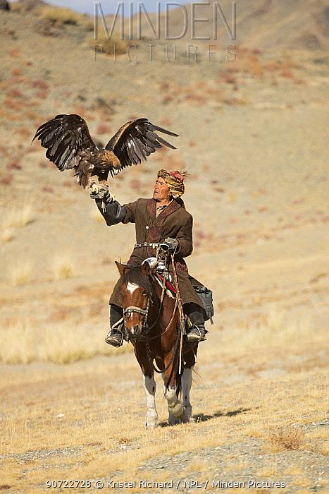 Eagle hunter mounted on Mongolian horse with his female Golden eagle (Aquila chrysaetos) at Eagle Hunters Festival, near Sagsai, Bayan-Ulgii Aymag, Mongolia. September 2014..