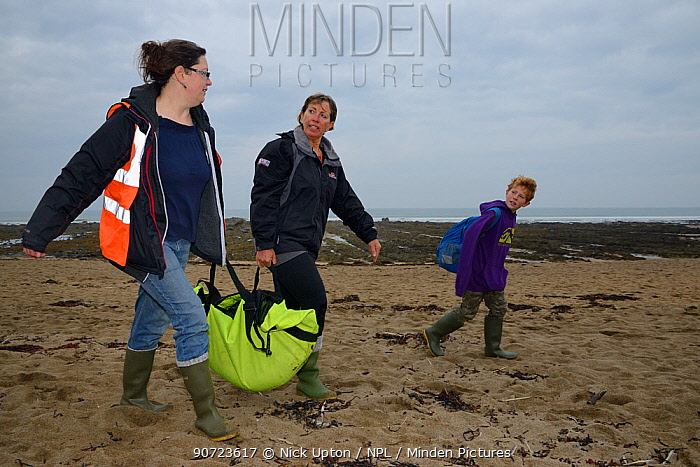 British Divers Marine Life Rescue animal medics Michelle Clement and Rachel Shorland carrying  injured Grey seal pup (Halichoerus grypus) 'Jenga', in a bag after rescuing it from a beach, Widemouth Bay, Cornwall, UK, October.  Model released.