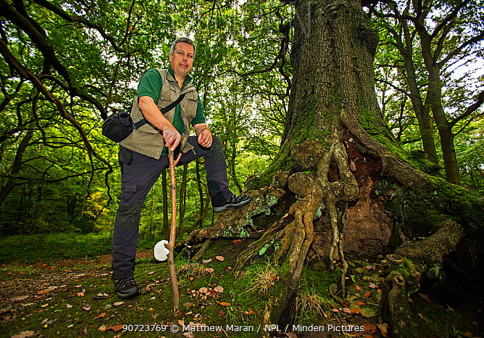 Trees management officer David Humphries on Two-Tree Hill, Hampstead Heath, England, UK. October 2015.