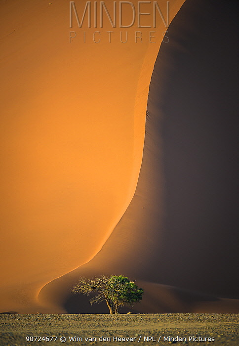Red dunes of Sossusvlei ,Namibia