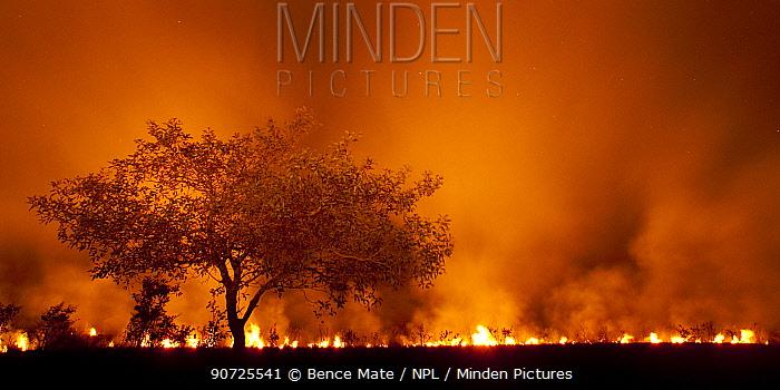 Grass fire at night in Pantanal, Brazil.