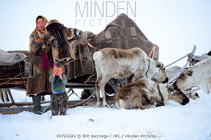 Nenet woman preparing for spring migration dressing herself and her son in traditional winter boots and coat made with reindeer skin. The temperature is below zero. Yar-Sale district, Yamal, Northwest Siberia, Russia.  April 2016.