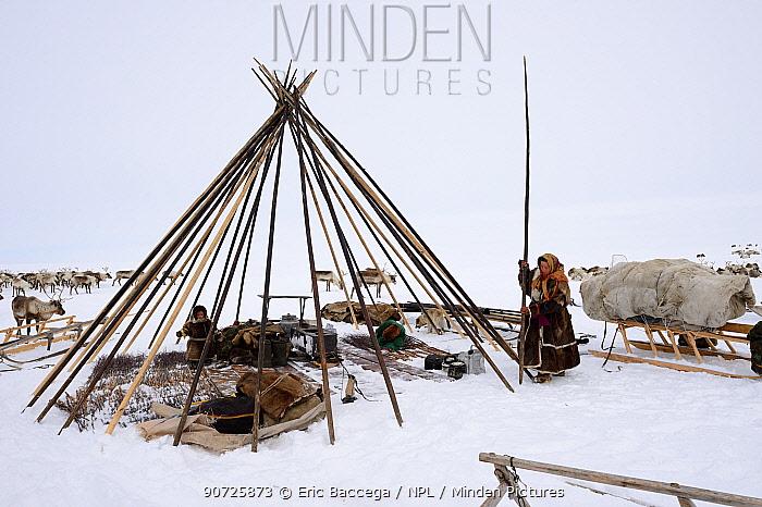 Nenet herders erecting tent on tundra. Yar-Sale district, Yamal, Northwest Siberia, Russia. April 2016.
