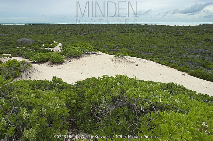 Aldabra Giant Tortoises (Aldabrachelys gigantea) aerial view of the dunes on the south coast of Grand Terre, lagoon in distance, Natural World Heritage Site, Aldabra