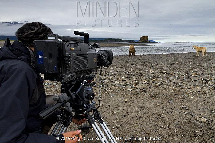 Cameraman filming Grizzly bear (Ursus arctos horribilis) and Grey wolf (Canis lupus) on production for 'Bears'. Katmai National Park, Alaska, July 2012.