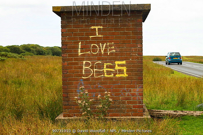 Graffiti on old bus stop saying 'I love bees', Gower, West Wales, UK. August 2014.