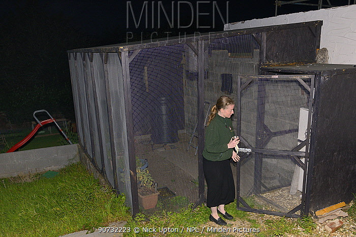 Samantha Pickering takes a bowl of mealworms to feed rescued bats in the flight cage in her garden, North Devon Bat Care, Devon, UK, October 2015. Model released.