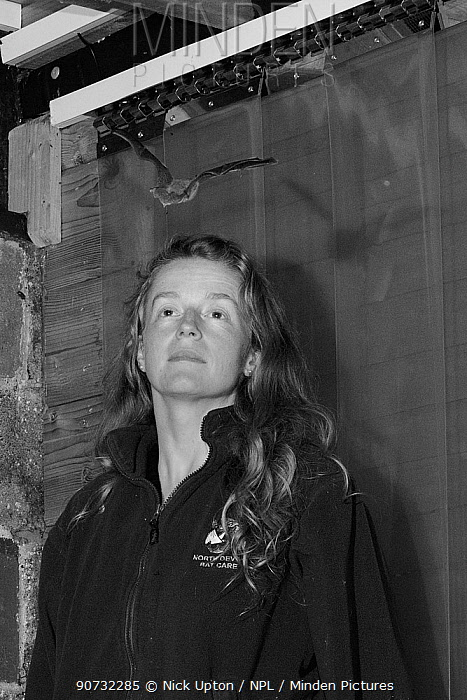Samantha Pickering watching a rescued Brown long-eared bat (Plecotus auritus) flying around her flight cage as she checks it's ability to hunt prey on the wing before release back to the wild, North Devon Bat Care, Barnstaple, Devon, UK, June 2016. Photographed by infra red light. Model released