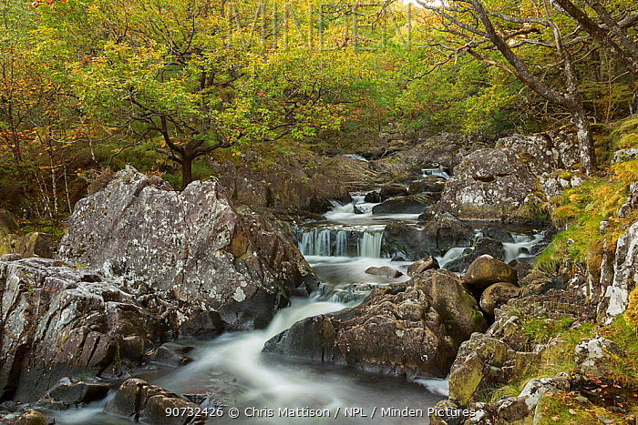 Oak woodland with mosses and running water, near Dolgellau, Snowdonia, North Wales, UK October
