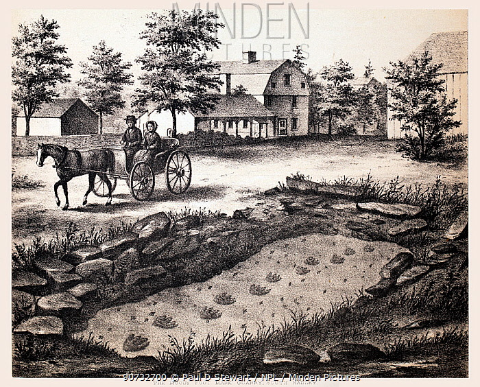 Lithograph of the Moody Footmark Quarry in South Hadley, where Pliny Moody discovered the very first fossil tracks in 1802.  From Hitchcock, Edward. Ichnology of New England. A Report on the Sandstone of the Connecticut Valley, especially its Fossil Footmarks. Boston: William White, 1858.