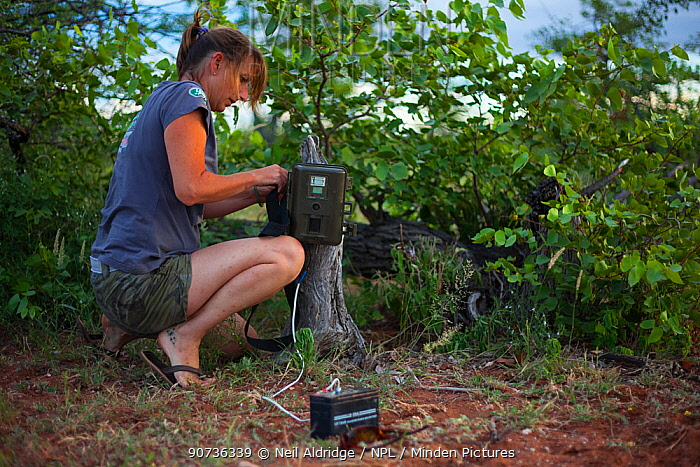 Researcher from the Endangered Wildlife Trust sets up a camera trap to monitor predator movements on Mapungubwe National Park, Limpopo Province, South Africa. February 2010.