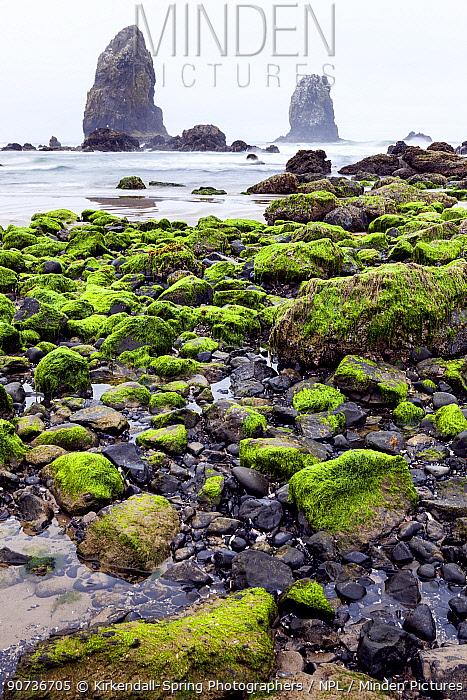 Rocky coast known as The Garden, Cannon Beach, Oregon, USA. April 2016.