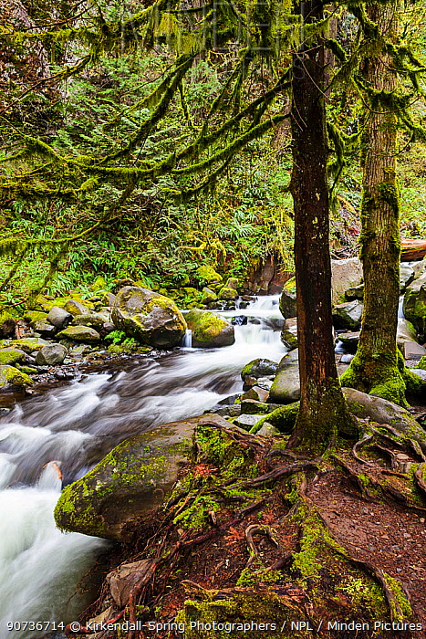 Multnomah Creek, Columbia River Gorge National Scenic Area, Oregon, USA. April 2016.