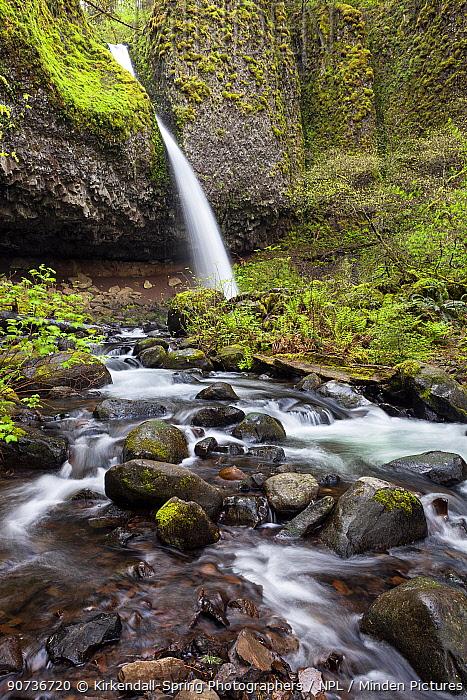 Upper Horsetail Falls (Poneytail Falls) Columbia River Gorge National Scenic Area, Oregon, USA. April 2016.