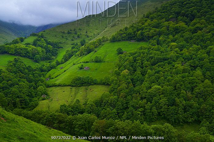 Mist above hillside in the Tuneles de la Engana, Vega de Pas, Valles Pasiegos, Cantabria, Spain, Europe. May 2015.