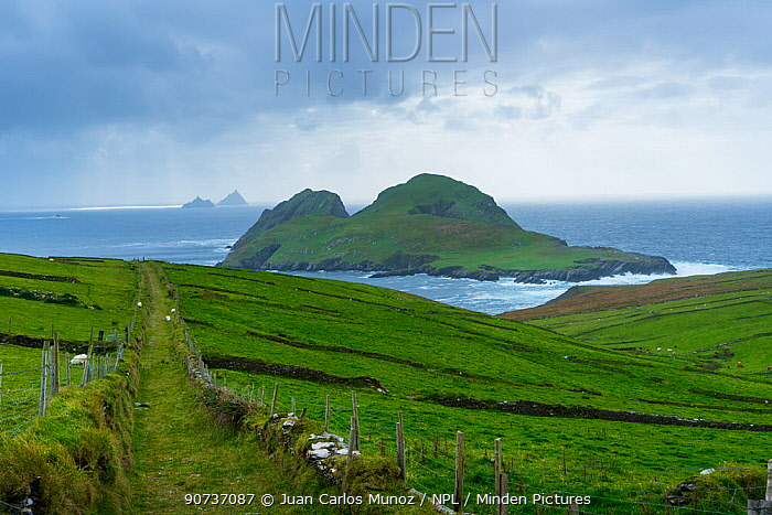 Skellig Islands, Puffin Island, County Kerry, Ireland, Europe. September 2015.
