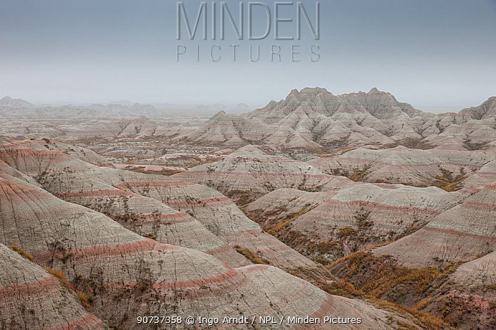 Eroded landscape, Sandstone striations and erosional features, in mist, Badlands National Park, South Dakota, USA September 2014.