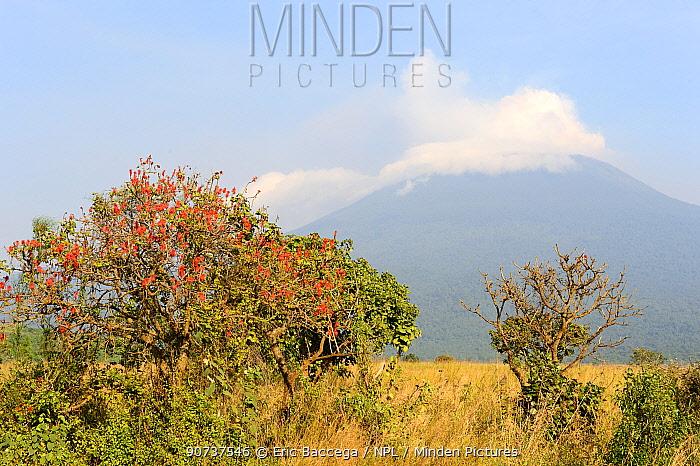 Mount Nyiragongo - smoking active volcano in the Southern Sector of the Virunga National Park. One of the several active volcanos in the Virunga Massif Volcano Range, Democratic Republic of Congo, Africa