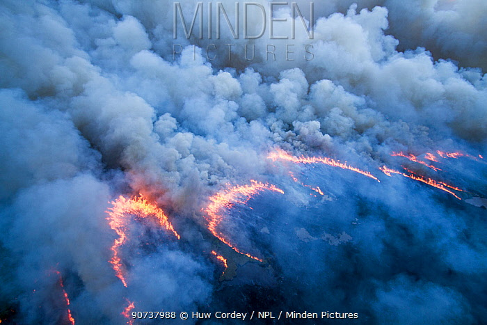 Aerial view of controlled burn in Everglades National Park,  Florida. Aerial. June 2011.