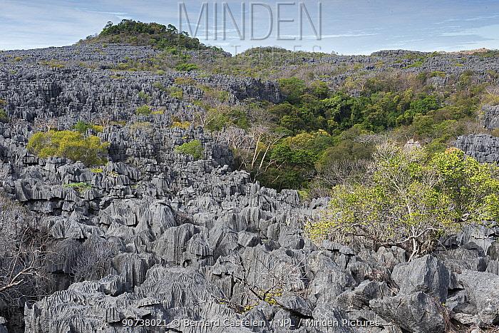 Tsingy karst-limestone formations, Ankarana National Park, Madagascar