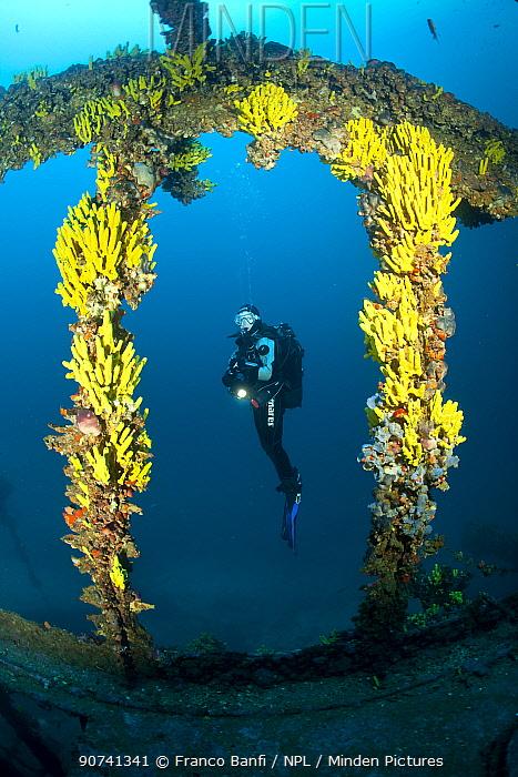 Scuba diver and yellow sponges (Aplysina cavernicola) on Brioni Steamship wreck, Vis Island, Croatia, Adriatic Sea, Mediterranean. Model released.
