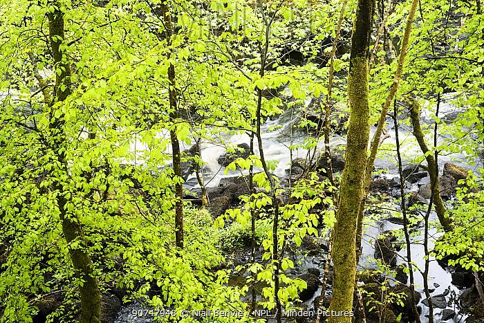 Aros woodland, Mull, Scotland, May 2016.