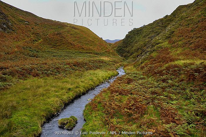 Moorland habitat in autumn with stream, Island of Jura, Scotland,UK, September