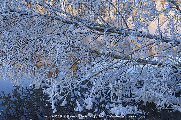 Cold frosty day at Nidelva river. Klbu, Norway January