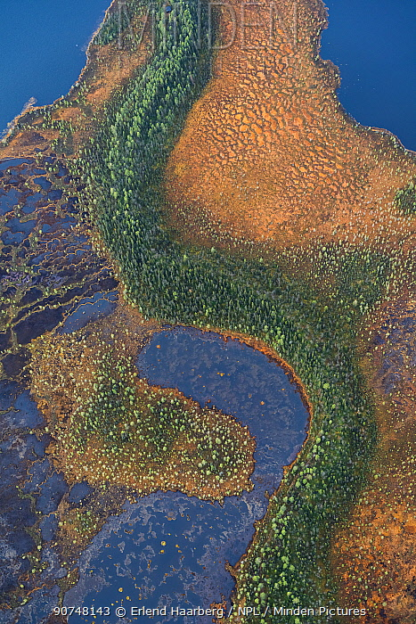 Aerial photograph of string bogs and coniferous forest in autumn in the Muddus National Park, World Heritage Laponia, Swedish Lapland, Sweden.