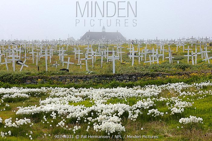 Greenlandic graveyard, Nuuk, Greenland, July 2016.