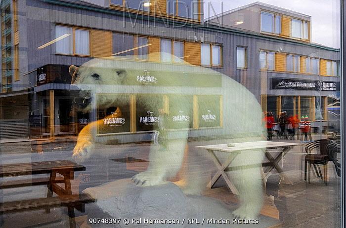 Polar bear  stuffed animal in shop window,  Longyearbyen, Svalbard, July 2016.