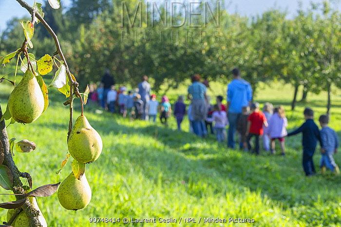 Children on school trip to orchard, Haute Savoie, France, October 2011.