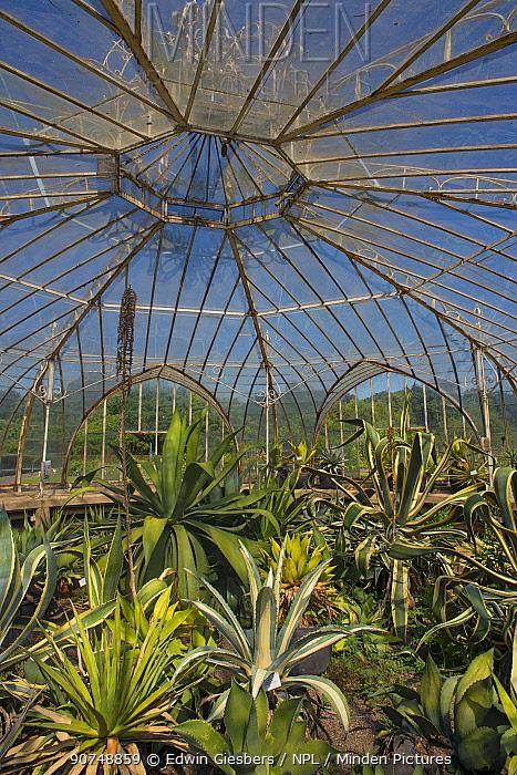 Interior of Balatkas Greenhouse, Botanic Garden Meise, Belgium, Augus 2013.