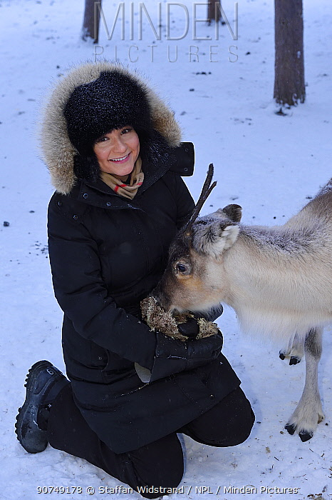 A reindeer sledding tour experience with sami reindeer herdsmen at the Reindeer Lodge in -25 degrees C, run by Nutti Sami Siida, near the Icehotel, in Jukkasjarvi, Lapland, Laponia, Norrbotten county, Sweden Model released.