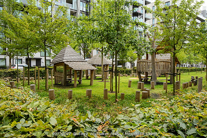 Environmental enrichment designed into housing estate with Hornbeam hedges, fruit trees and children's playground, Easy Village housing at site of Olympic Village, Stratford, London UK 2014